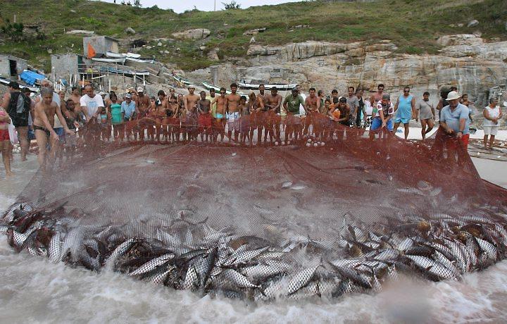 Pesca Predatória